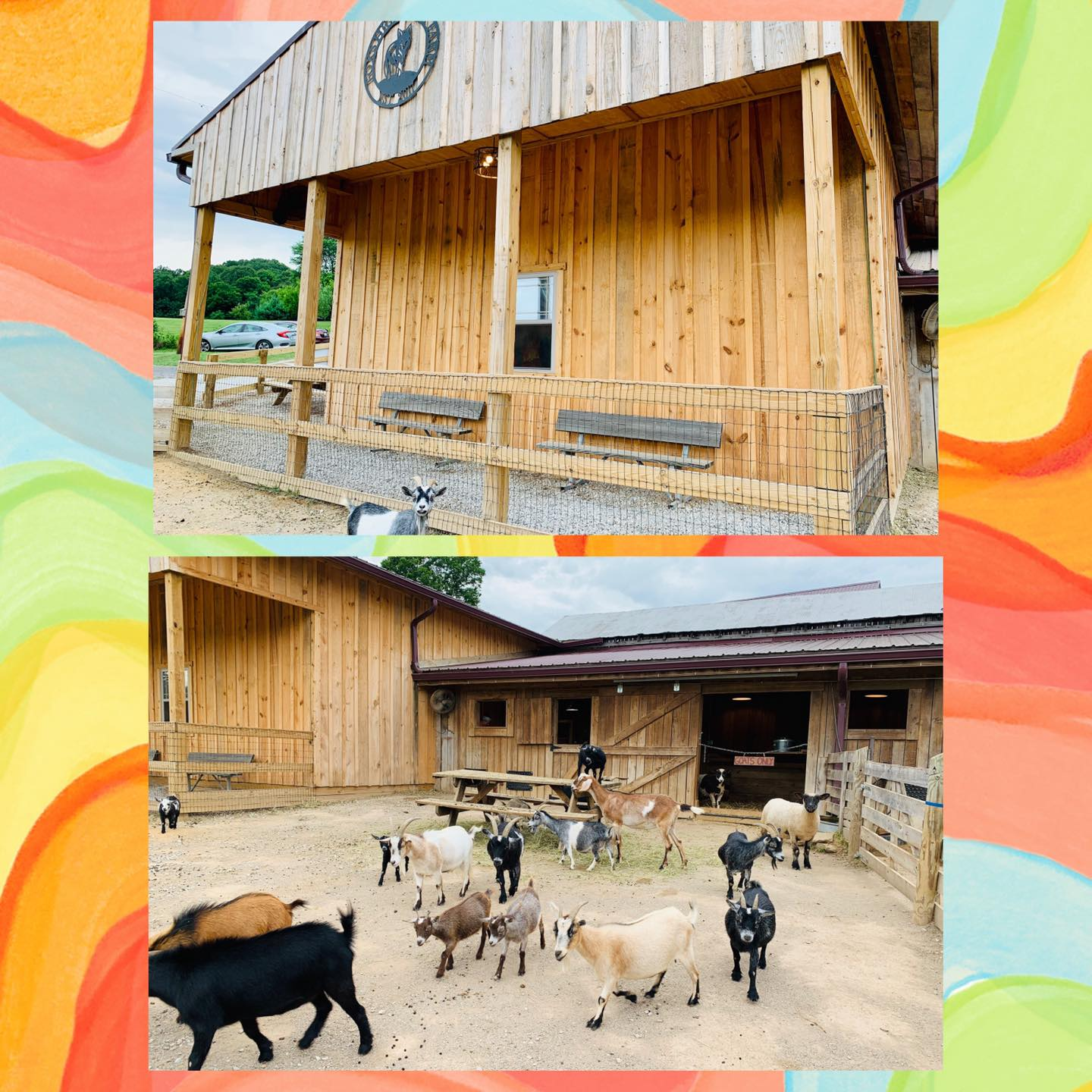 petting zoo area with open pen area